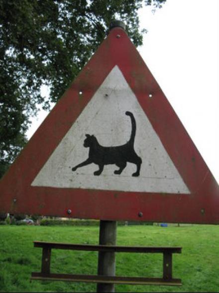Katwaardig.nl Blog voor kattenliefhebbers
